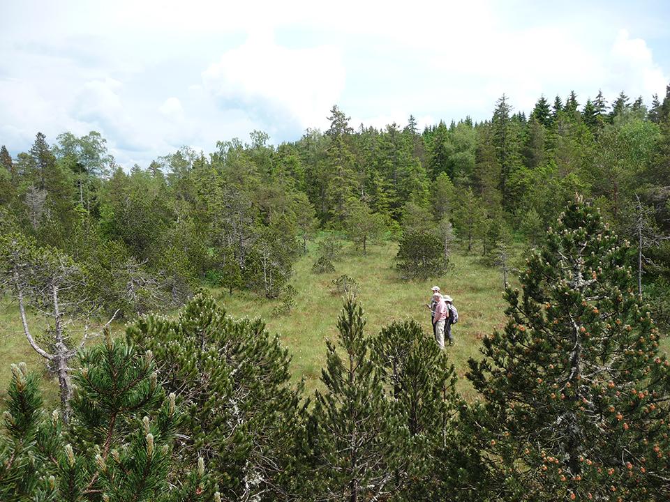 Blick auf das Hochmoor im Torfstich Feldern